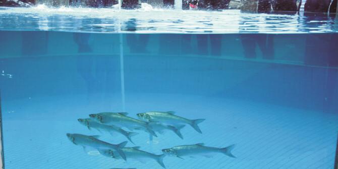 鲌鱼产业发展迅速