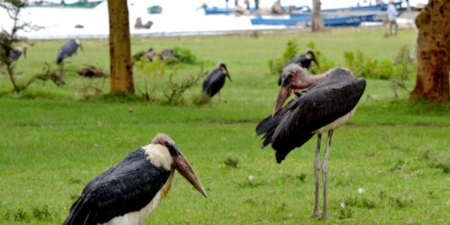 """""""打卡""""肯尼亚:这些野生飞禽,你都认识吗"""