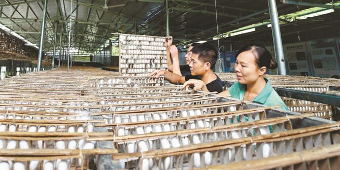 村辦產業 助力脫貧