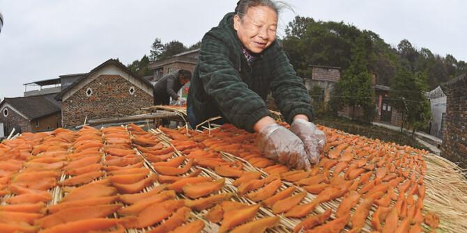 小小红薯促增收