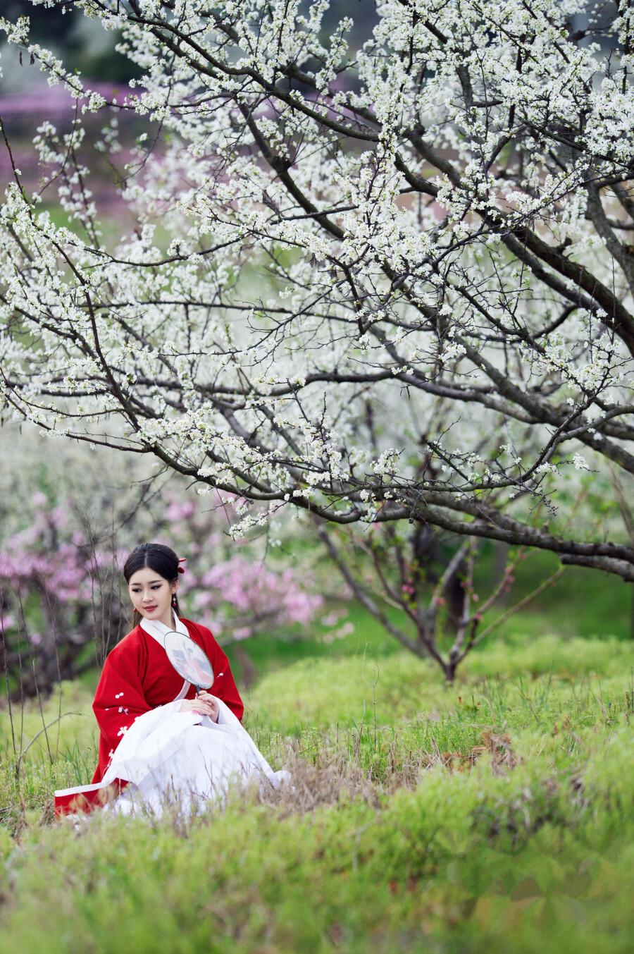 梨花情 - 春色满园 - 春色满园